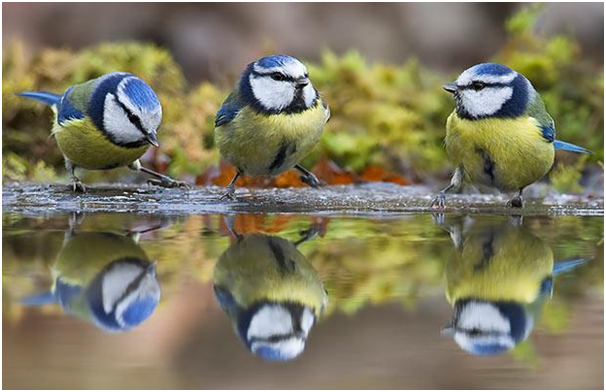 five-feathered-friends-you-can-attract-to-your-garden-this-winter2